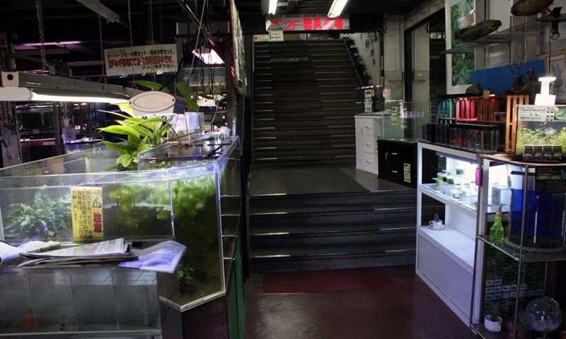 バーズアイ水槽は2階の器具売場になります。階段を使ってください。