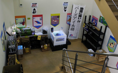 大型チェーン店舗かねだい横浜 レクタングラ販売開始