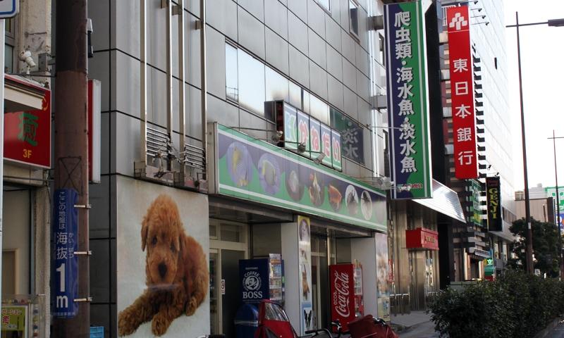 かねだい横浜店の入り口です。市街地にある4階建ての大型チェーンのペットショップです。