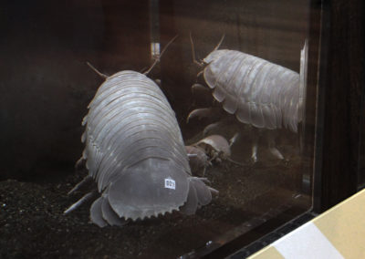 相模川ふれあい科学館 結露問題を解消して深海生物を展示した