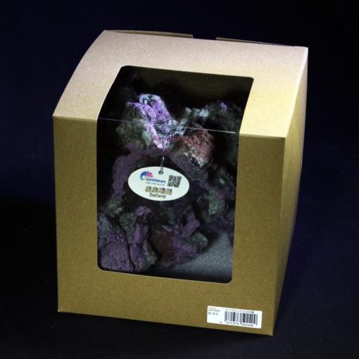 装飾珊瑚 ライブロック O 石灰藻