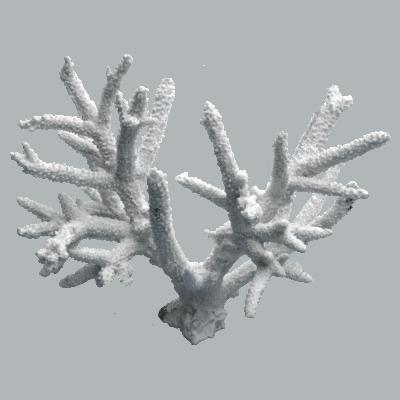 装飾珊瑚 白珊瑚 D 白
