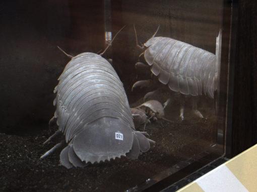 相模川ふれあい科学館 結露問題を解消して深海生物を展示