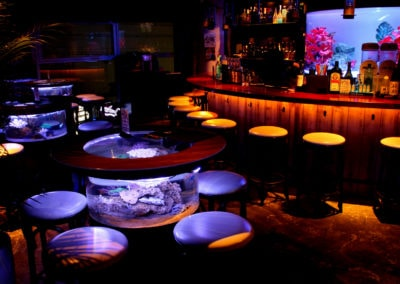 birds-eye-aquarium-in-bar-shark