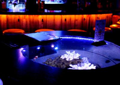 birds-eye-aquarium-in-bar-shark5