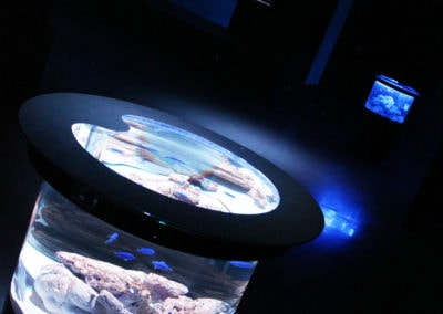 東京にあるマクセルアクアパーク品川の「NIGHT BLUE LOUNGE」という期間限定イベントに設置されたバーズアイ水槽