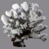 装飾珊瑚 白珊瑚 W1 白